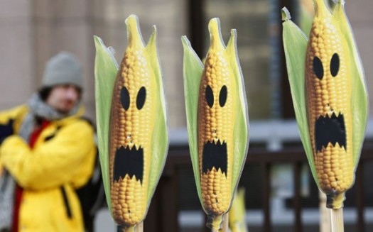 130824-Monsanto