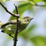 As aves que o Brasil acaba de descobrir