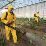 Pesquisadores criam biossensor para detectar pesticida
