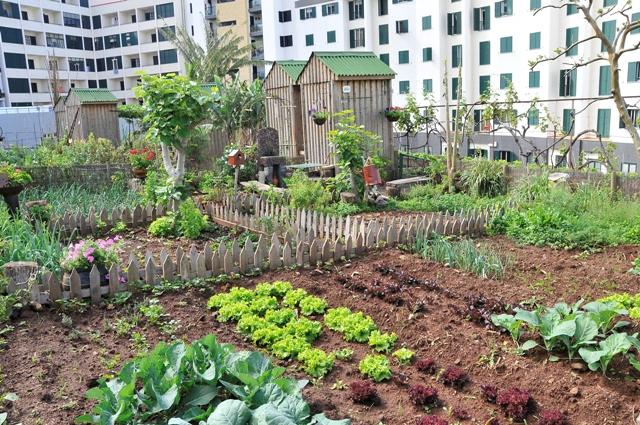 pequena horta no jardim : pequena horta no jardim:QUINTAIS IMORTAIS: Berlim, possível capital mundial das hortas