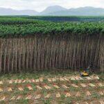A insustentável expansão da área agrícola global
