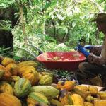 Pará: Agricultura Orgânica avança, enfrentando lógica da monocultura