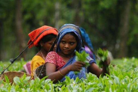 140514-Assam3