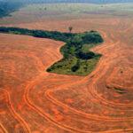 """Amazônia: a atualidade do """"Desmatamento Zero"""""""
