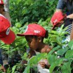 Que esperar da Feira Nacional da Reforma Agrária