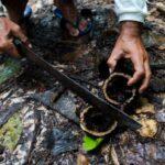 Amazônia: outra produção é possível