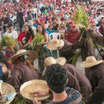 Outra Agricultura possível: o arroz orgânico do MST