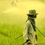 Agrotóxicos: como o governo quer a liberação total