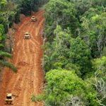 Para compreender a Lei da Grilagem, que ameaça Amazônia