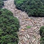 Um passo contra o desmatamento da Amazônia?