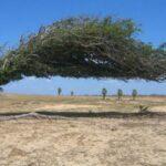 Há planos contra desertificação. Faltam decisões