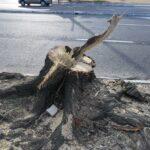 Porto Alegre resiste às moto-serras