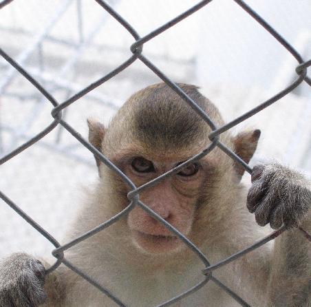 130611-Zoo4