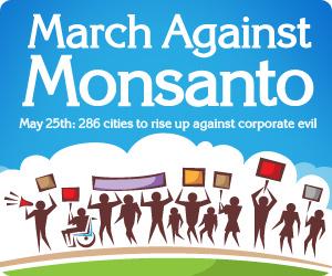130824-Monsanto2