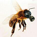 O envenenamento das abelhas