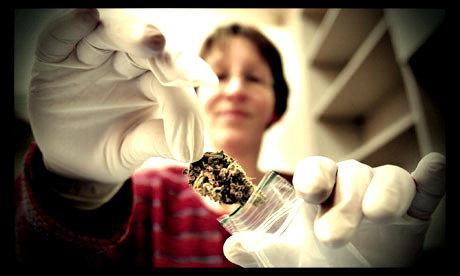 A-cannabis-pharmacy-in-th-006