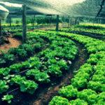 A possível transição para agricultura ecológica