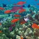 Mudança oceânica, a outra grande ameaça ambiental