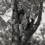 Uma Tipuana e 40 anos de história