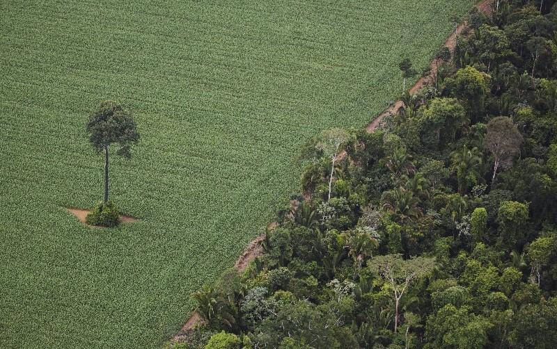 Resultado de imagem para soja floresta