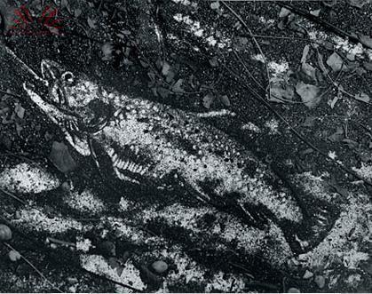 151201_vik muniz_ le trout after Courbet_Andréa Martins da Silva-LeilãoAloisioCravoItem145
