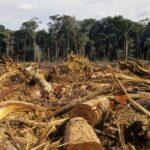 Assim o Brasil perde a Floresta Amazônica