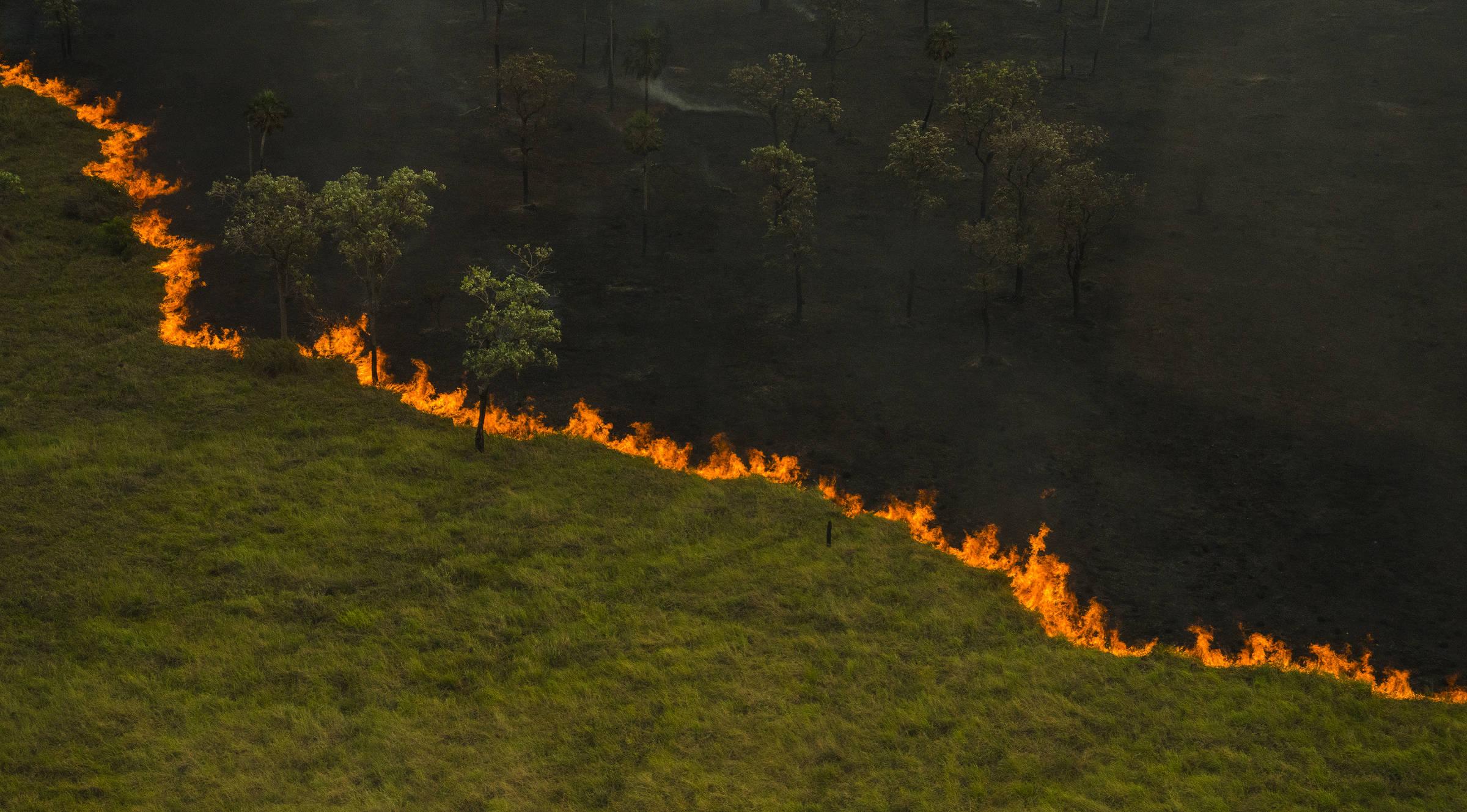 As causas da maior tragédia do Pantanal - Outras Palavras